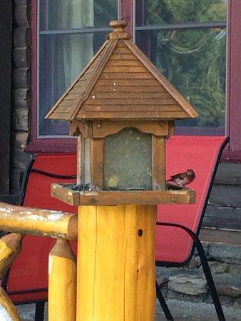 North River, NY: Bird feeders.