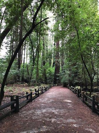 Felton, Californië: Great redwoods!