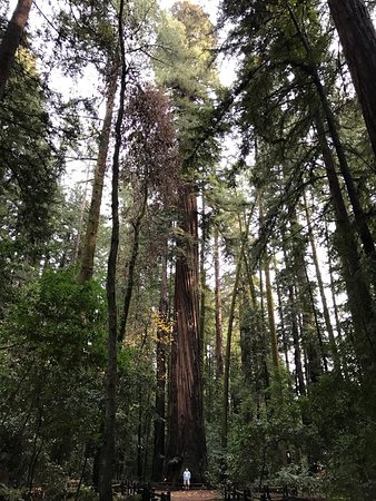 Felton, Californie : Great redwoods!