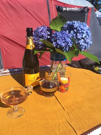 Whitianga Campground : Wild Hydrangea from the campground complete our afternoon with bubbles!