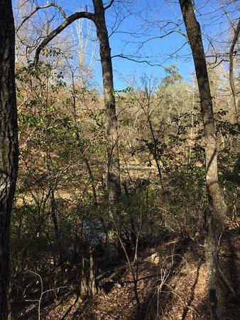 Auburn, AL: photo3.jpg