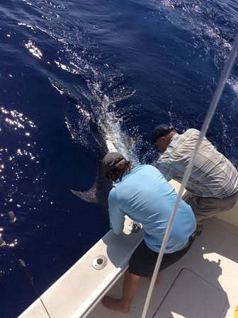 High Noon Sport Fishing: Bloody Good Fight! So cool, seeing such a fish and touching such a fish. What an experience!