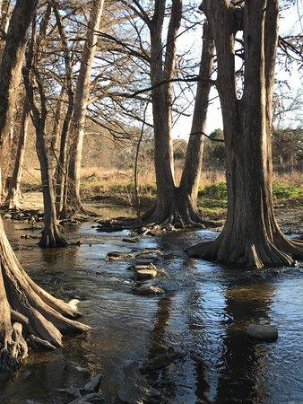Cibolo Nature Center: Creek