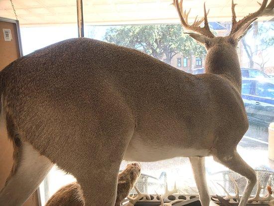 Llano, TX: in front window