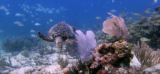 Manta Divers