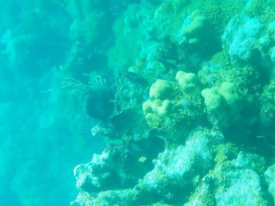 Undersea Explorer: 20170131_162131_large.jpg