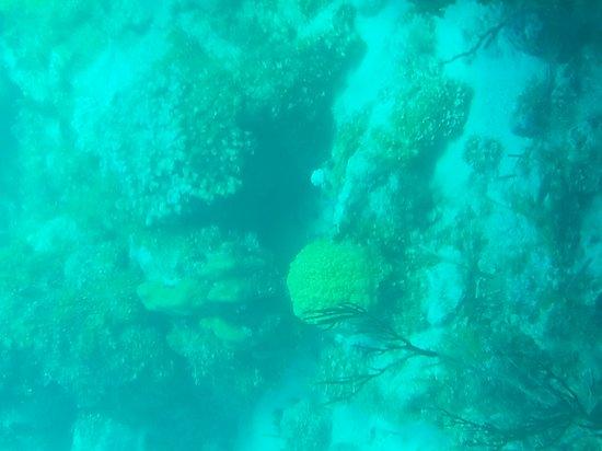 Undersea Explorer: 20170131_160750_large.jpg