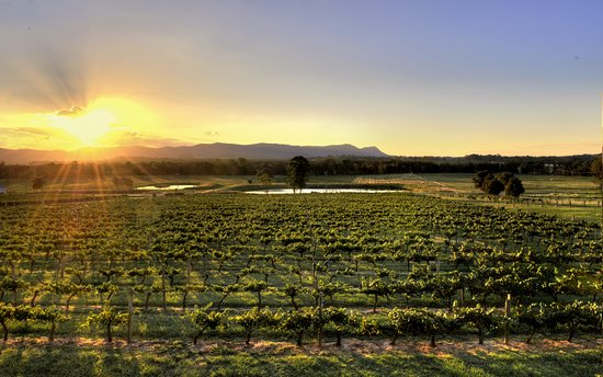 Lovedale, Australia: View from the Cellar Door
