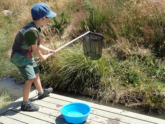 Animal Farm: Pond dipping!