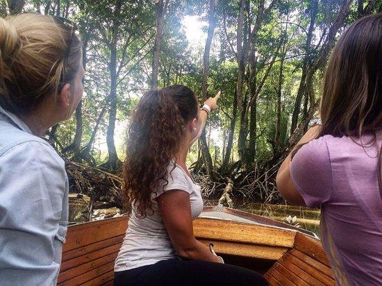 Borneo Trekker - Private Day Tours : Mangrove Safari (2)