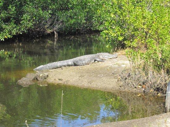 Jungle Erv's Everglades Airboat Tours foto