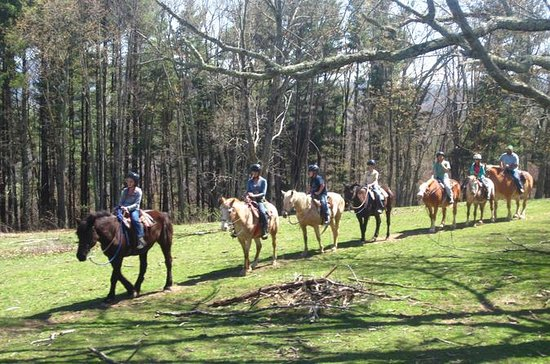 Fern Forest Trail Horseback Riding at