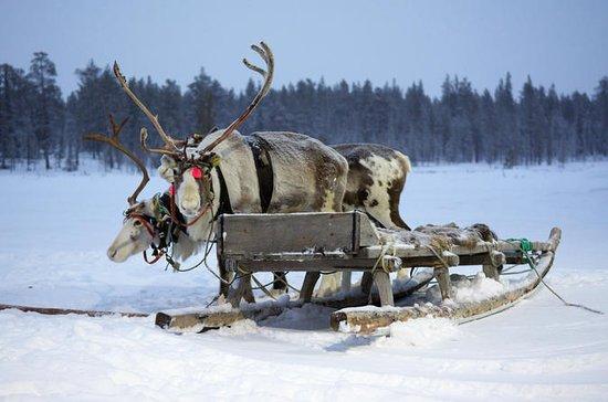 Samische Kulturreise inklusive...