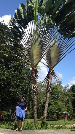 Chachagua, Costa Rica: Palmeras preciosas