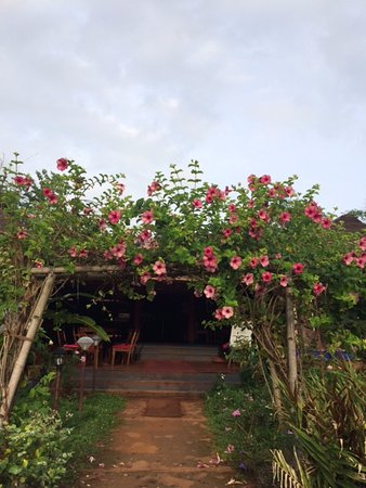 Kittur, Indien: Way to dining area. Alamanda flowers all around.