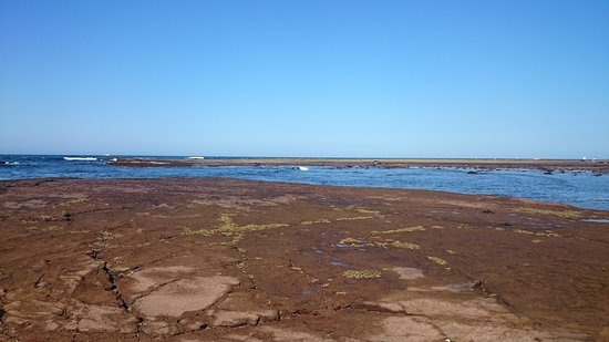 Collaroy Beach, Αυστραλία: Rock pools at low tide allow for exploring but do not take anything! Rangers patrol the area.