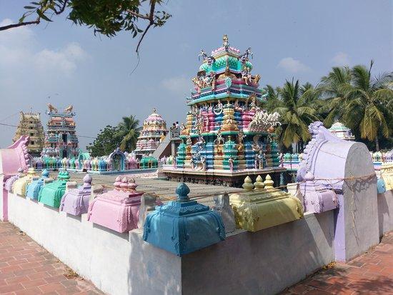 Antarvedi, India: IMAG6649_large.jpg