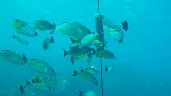 Fish Eye Marine Park: 20170126_122614_large.jpg