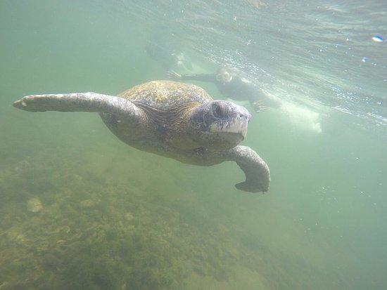 Puerto Villamil, Ισημερινός: tortugas en los tuneles