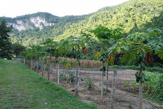 Black Rock Lodge: Black Rock's organic garden