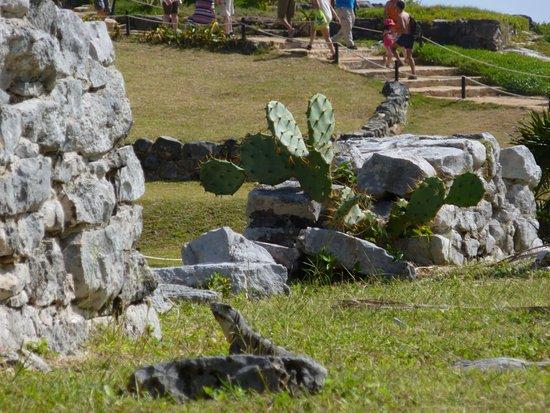 Tulum Archaeological Site: Maya Ruïnes van Tulum