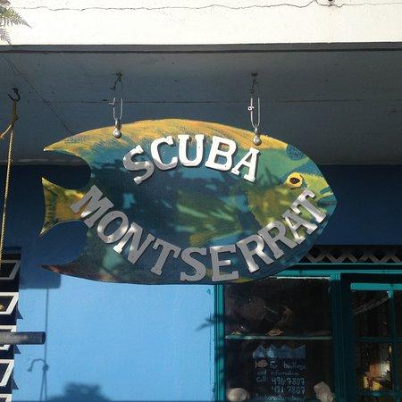 Little Bay, Montserrat: Scuba Montserrat Fish