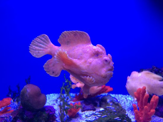 cool fish picture of maui ocean center wailuku tripadvisor