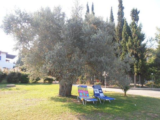 Eretria Village Resort & Conference Center: espace détente au bord de la piscine