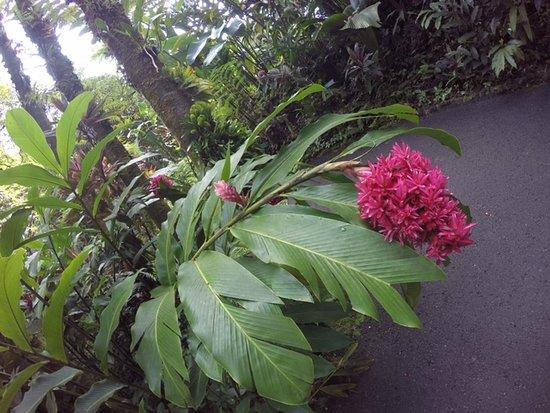 Papaikou, Χαβάη: Hawaii Tropical Botanical Garden
