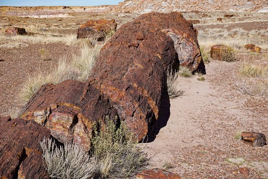 Large petrified tree Picture of Petrified Forest National Park