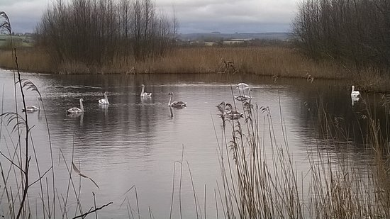 Somerset, UK: Swans doing what they do best