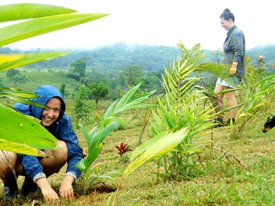 Tenorio Volcano National Park, Costa Rica: Volunteer Program