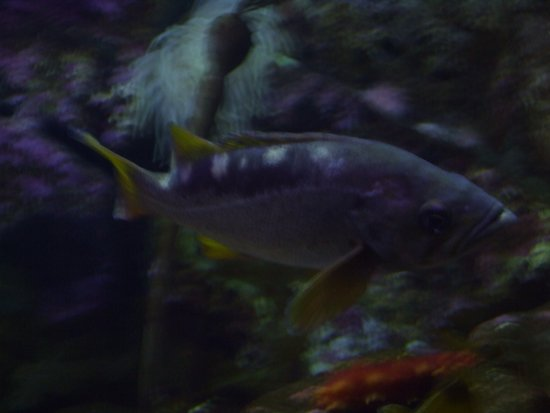 Seward, AK: ASLC - an inqusitive fish in one of the display exhibits