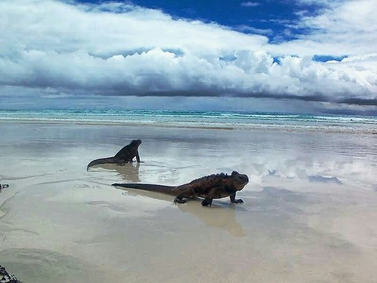 a 2 5km walk through the national park to get go tortuga bay it s a