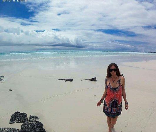 Galapagos Beach at Tortuga Bay: IMG_20170131_231928_large.jpg