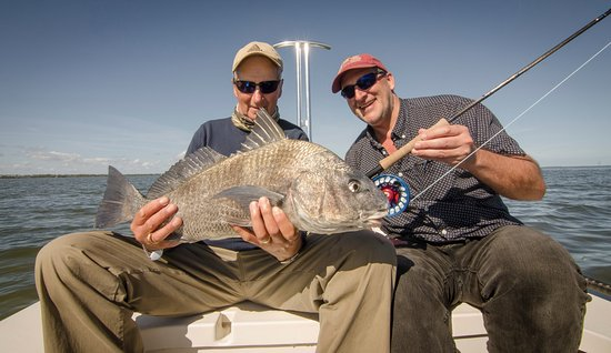 Edgewater, FL: Black Drum