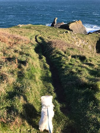 The Lizard and Kynance Cove: Great for dogs, but keep them on a lead! (cliffs)