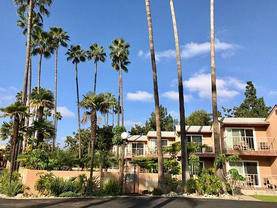 Chino, Калифорния: photo3.jpg