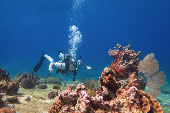 Cozumel Coral Reef Private Scuba Diving: You won't regret it! SCUBA with Mario is the best!