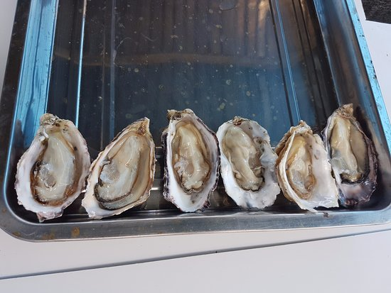Oysters R Us: 6 to start with!