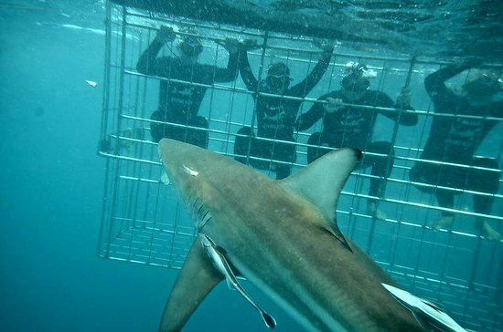 Shark Cage Diving KZN: IMG-20170201-WA0009_large.jpg