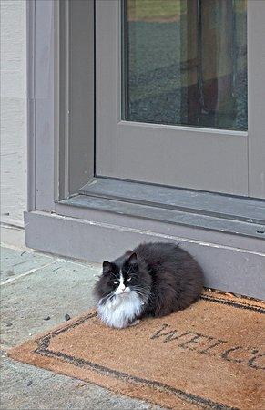 Huntly, VA: The very fight-seasoned outdoor (!) cat!