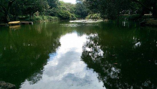 Jardin Botanico de Medellin: Pond