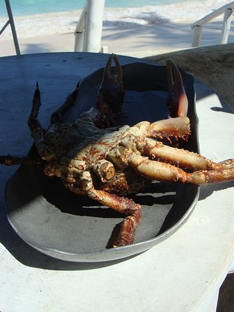 Spider Crab presented before cooking
