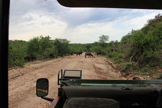 Balule Nature Reserve, Νότια Αφρική: Game ride