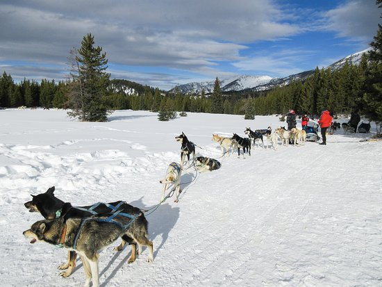 Spirit of the North Sled Dog Adventures