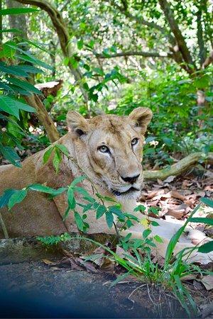 写真Neyyar Wild Life Sanctuary枚