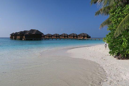 Fihalhohi Island Resort: photo0.jpg