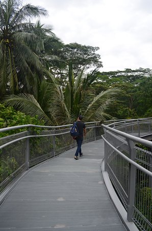 The Southern Ridges Kent Ridge Park canopy walk! & Kent Ridge Park canopy walk! - Picture of The Southern Ridges ...