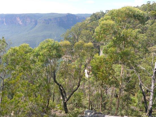 Blackheath, Австралия: Gums & Leaves